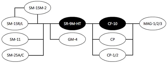 SR-9M-HT System Diagram Digitimer