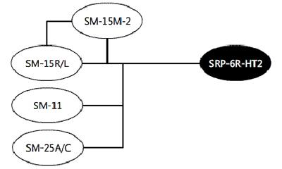 SRP-6R-HT2 System Diagram Digitimer