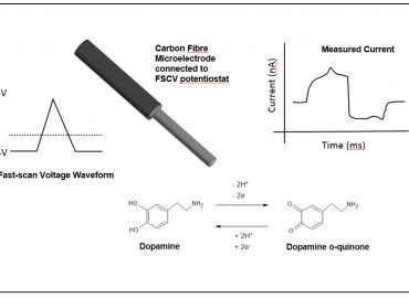 FSCV electrode dopamine